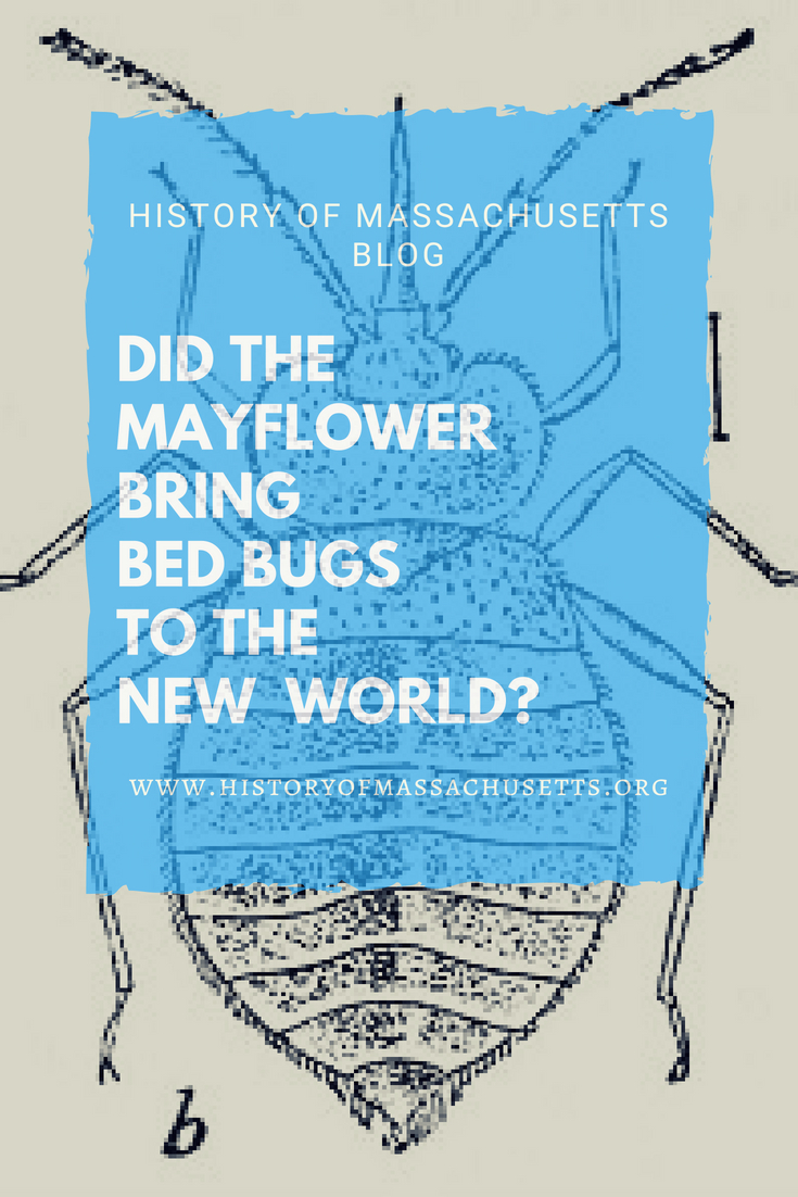 Did the Mayflower Bring Bed Bugs to the New World?