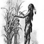 Illustration of Squanto demonstrating how well the pilgrim's corn grew, circa 1911