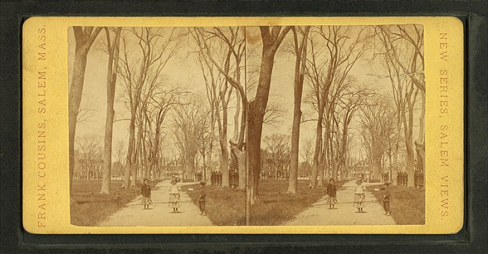 Salem Common, photographed by Frank Cousins, circa 19th century